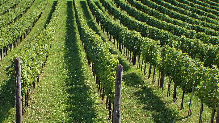 Wine growing regions of Germany