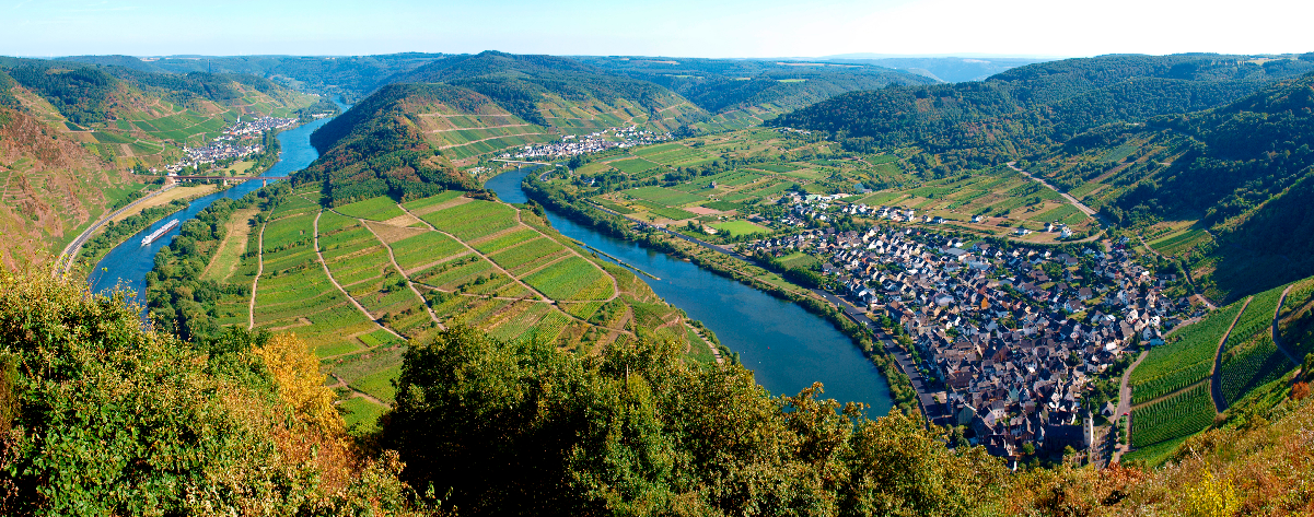 german wine culture on the Moselle