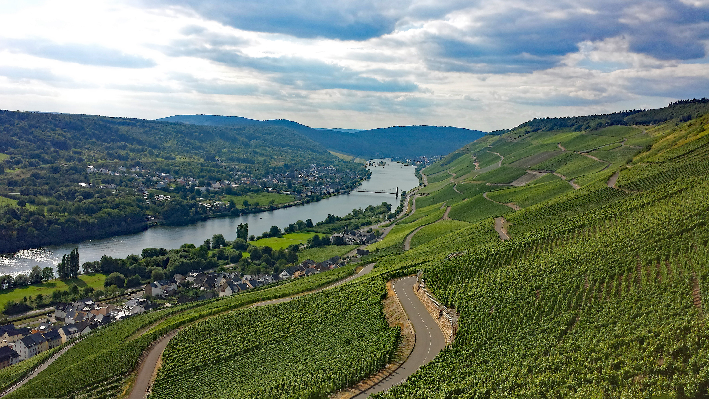 Vineyards near Moselle