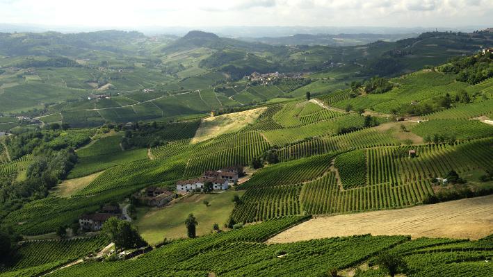 Italienische Rebfläche & Weinreben