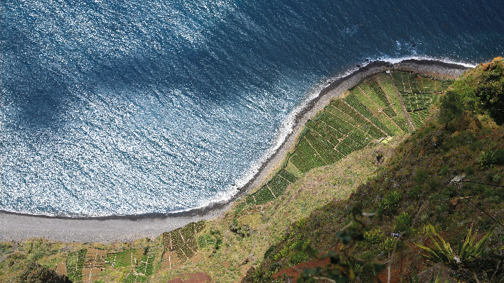 Vineyards on the Azores