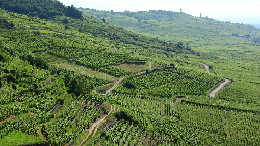 Weinfelder in Rumaenien