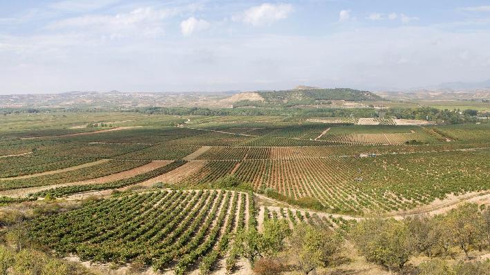 Vineyards of Baron de Ley in Cenicero, Rioja