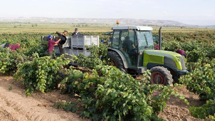 Harvest of Baron de Ley