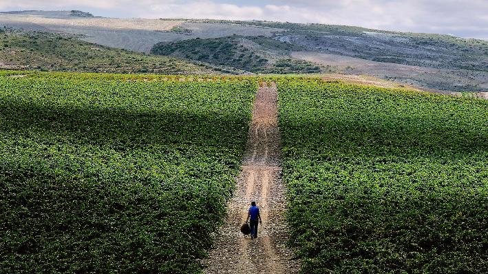 Vineyards of Baron de Ley in Ausejo