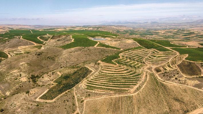 Vineyards of Baron de Ley