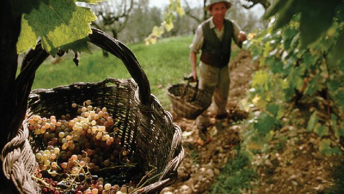 Lebanese Farmers