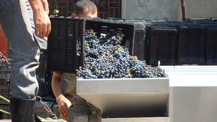 Harvest of Chateau Heritage