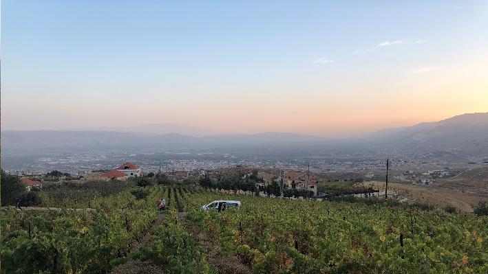 Harvest in Lebanon