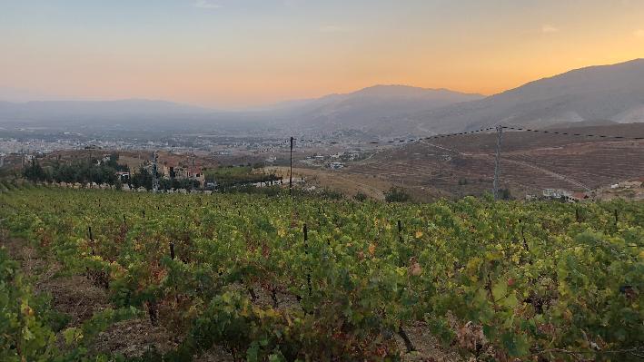 Vineyards of Chateau Khoury