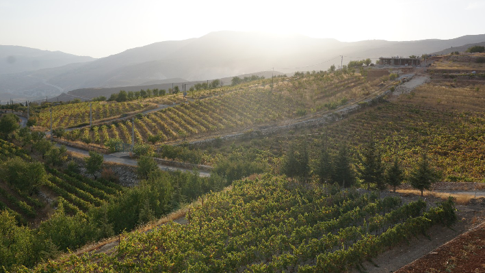 Domaine and grapes of Chateau Khoury