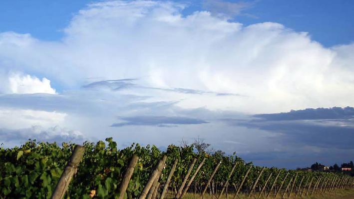 Weinfelder von Chateau Nakad aus dem Libanon
