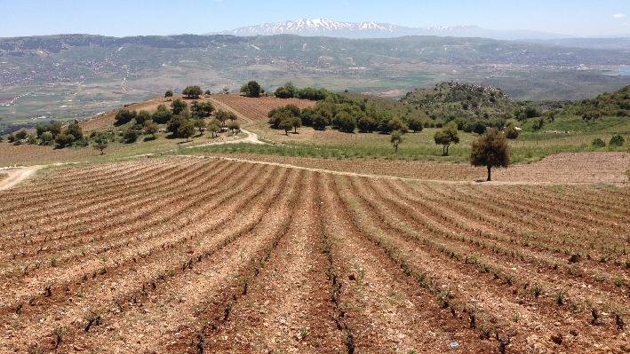 Landscape and Vineyards of Chateau Qanafar