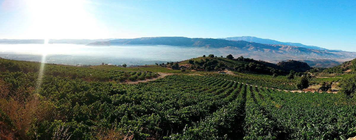 Weingut Chateau Qanafar aus dem Libanon
