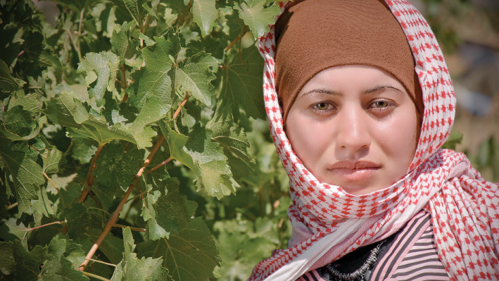 Harvest of Domaine Bargylus in Syrien