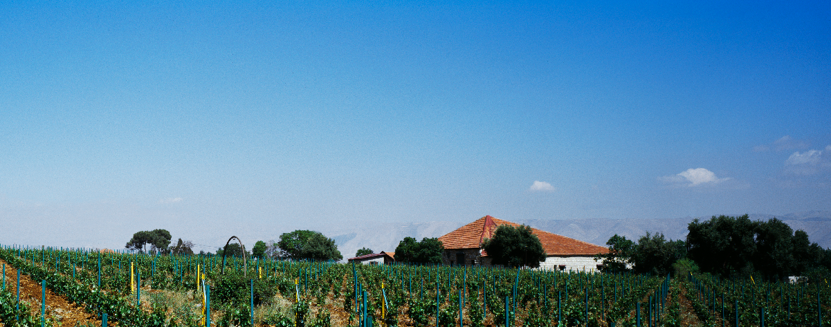 Winery Domaine des Tourelles from Lebanon