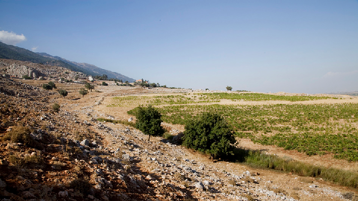 Landscape and vines in Lebanon