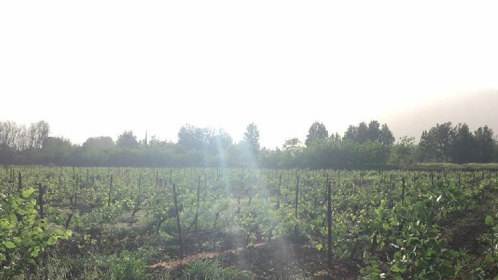 libanesisches Weinfeld von Karam Wines