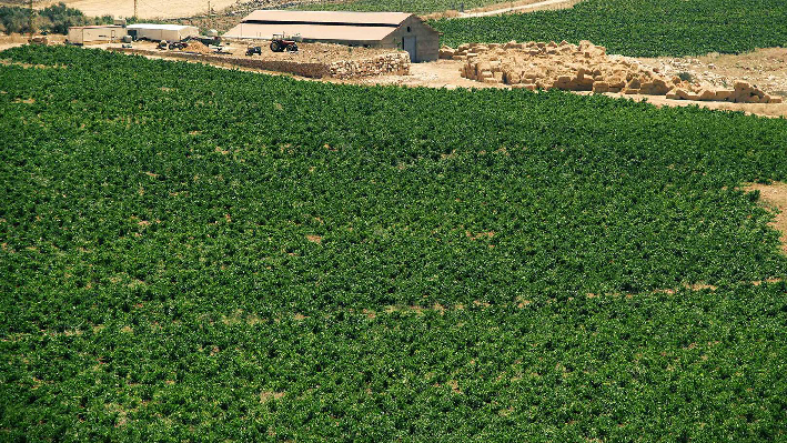 Lebanese Vineyards of Latourba
