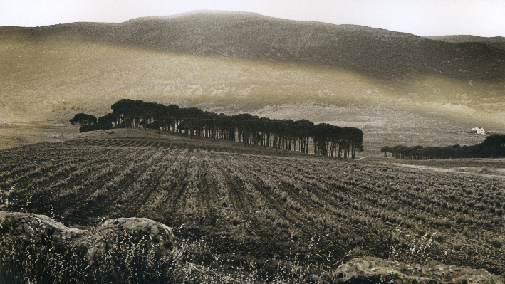 Vineyards of Massaya