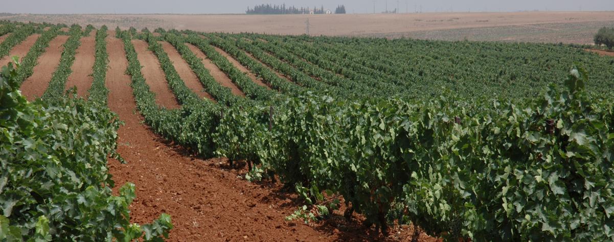 Marokkanisches Weingut Domaine Sahari