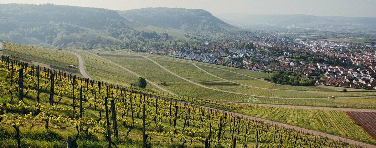 Winery Albrecht Schwegler from Baden-Württember
