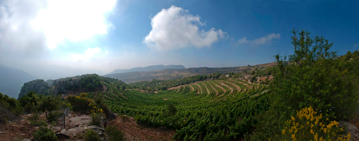 Winery Batroun Mountains from Lebanon