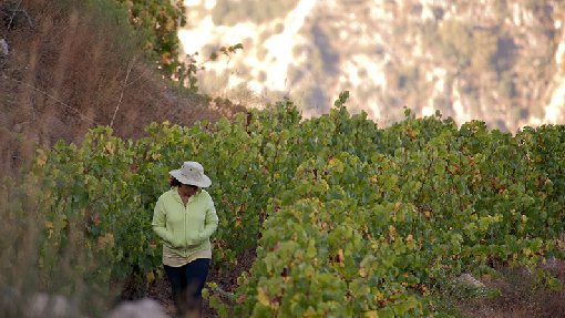 Weinlese von Batroun Mountains