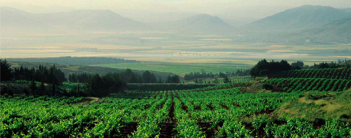 Winery Chateau Kefraya from Lebanon