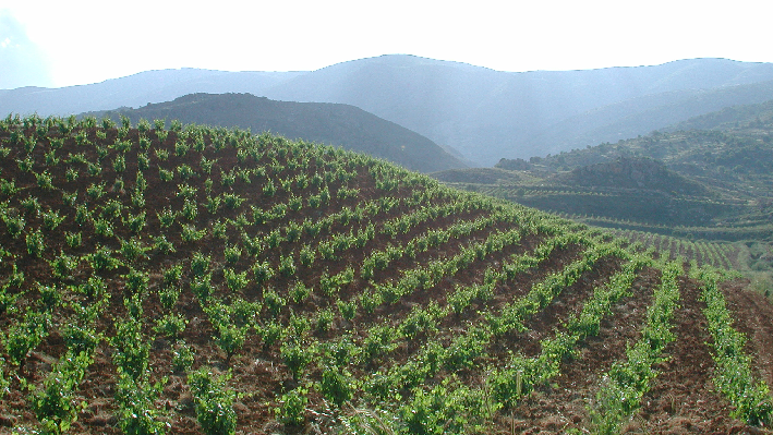 Vineyards of Chateau Kefraya