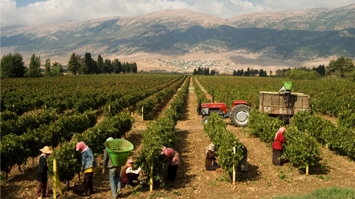 Harvest in Lebanon