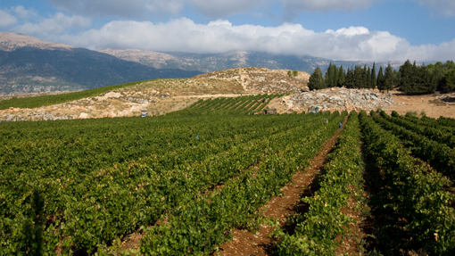 Winery Chateau Ksara from Lebanon