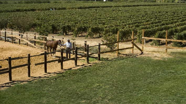 Vineyards of Domaine Wardy