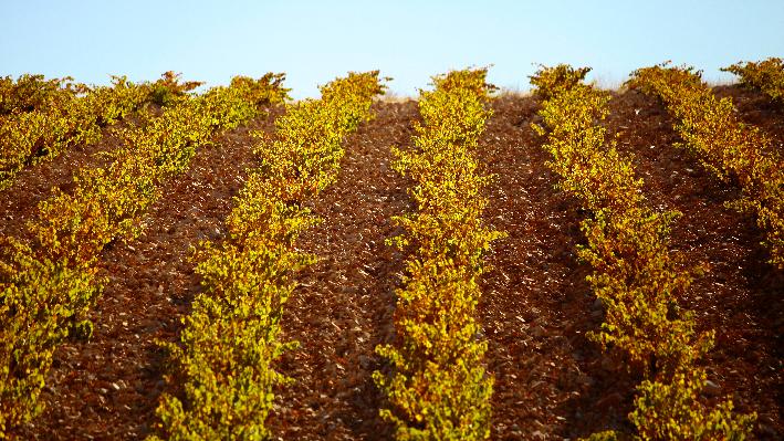 Fruchtbarer Boden im Libanon